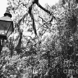 Carol Groenen - Southern Lamp in Black and White