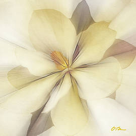 Southern Magnolia by Claudia O'Brien
