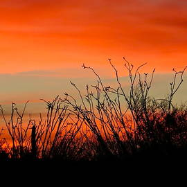 Southwestern Silhouettes by Bonnie See