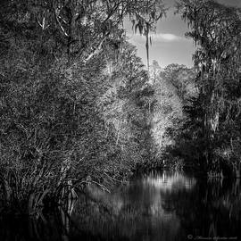 Spanish Moss by Marvin Spates