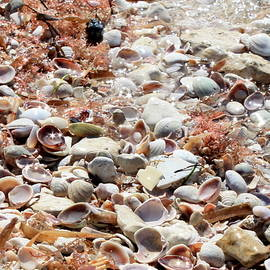 Carol Groenen - Sparkling Shells