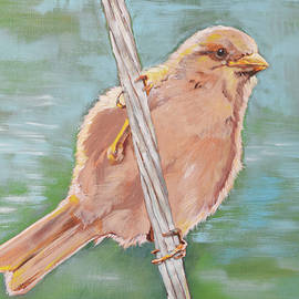 AMBER FOOTE - Sparrow on a Wire