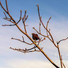 Sparrow on the branch by Viktor Birkus
