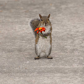 Special for you, Squirrel with flower by Zina Stromberg