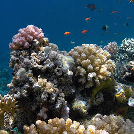 Spectacular Red Sea