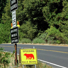 LeeAnn McLaneGoetz McLaneGoetzStudioLLCcom - Speeding Kills Bears