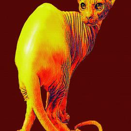 Sphynx Cat by Jane Schnetlage