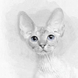 Sphynx Kitten No 07 by Mia Stedt
