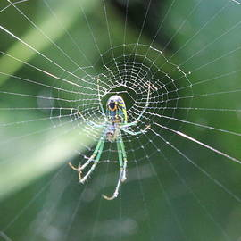 Spider in Web by Jeff Roney