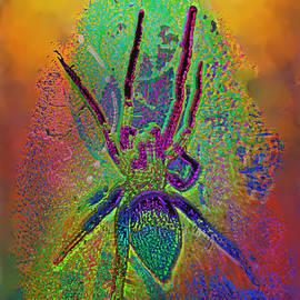 Kevin Caudill - Spider