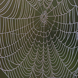 Spider Web And Morning Dew by Juergen Roth