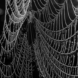 Alana Ranney - Spider Web Close Up