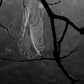 Alana Ranney - Spider Web Covered in Dew