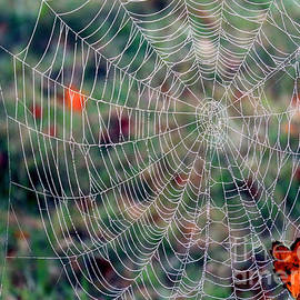 Spider Web in Autumn by Janice Drew