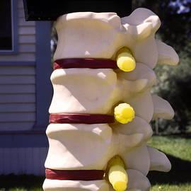 Sally Weigand - Spine Mailbox