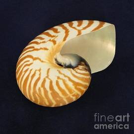 Barbie Corbett-Newmin - Spiral Spell of the Nautilus