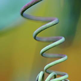 Spiraling by Debbie Oppermann
