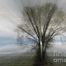 Sandra Bronstein - Spirit of Nature