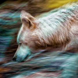 Rick Higgins - Spirt of The Wolf