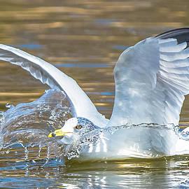 Splashdown by Jeff at JSJ Photography