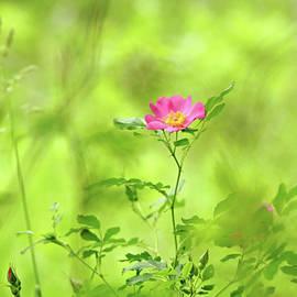 Splashes Of Pink In Field Of Green by Debbie Oppermann