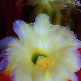 SPLENDID  FLOWER of CACTUS. by Alexander Vinogradov