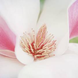 Toni Hopper - Splendid Spring