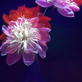 SPLENDOR of PEONIES FLOWERS #3. by Alexander Vinogradov