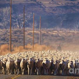 Spot The Dog Sheepherd