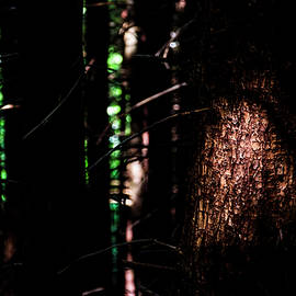 Spotlight in the Woods - Pelo Blanco Photo