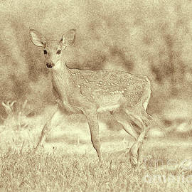 Spotted Fawn by Jim Lepard