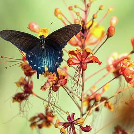 Spread Your Wings at Dawn  by Saija Lehtonen