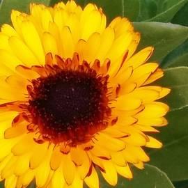 Nilu Mishra - Spreading petals
