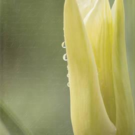 Jordan Blackstone - Spring Art - Spirit Of Love