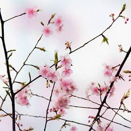 Spring Awakening by Eena Bo