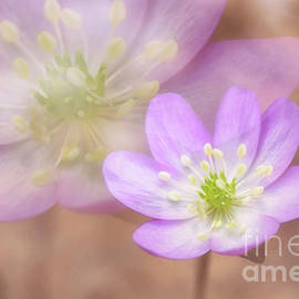Veikko Suikkanen - Spring beauty II