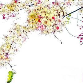 Ian Gledhill - Spring Blossom