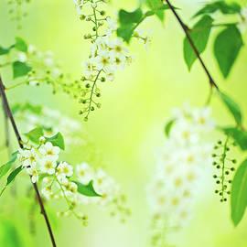 Oksana Ariskina - Spring Blossom