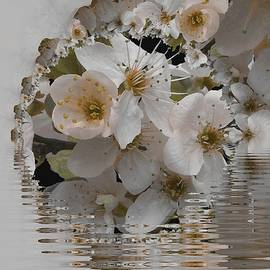 Nancy Pauling - Spring Blossom Time