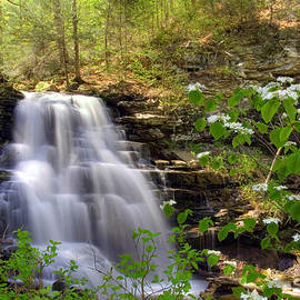 Gene Walls - Spring Blossoms Grace Erie Falls
