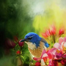 Diane Schuster - Spring Blue Jay