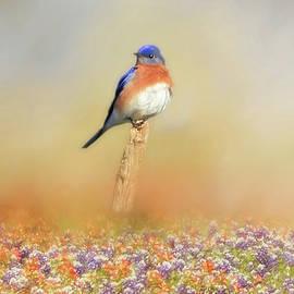 Donna Kennedy - Spring Bluebird
