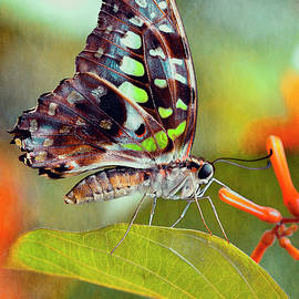 Spring Butterfly by Maria Angelica Maira