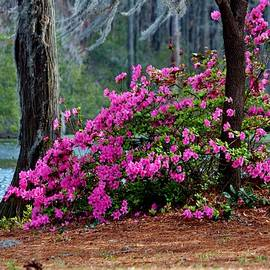 Cynthia Guinn - Spring By The Lake