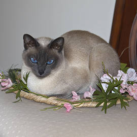 Spring Cat by Sally Weigand