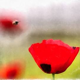 Spring Flowering Poppies by Michael Goyberg