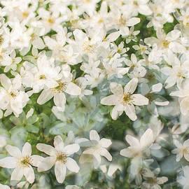 Marcus Karlsson Sall - Spring flowers I