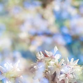 Marcus Karlsson Sall - Spring flowers II