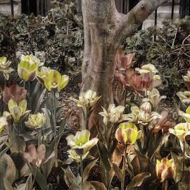 Joann Vitali - Spring Flowers