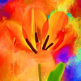 Darren Fisher - Spring Full Of Color